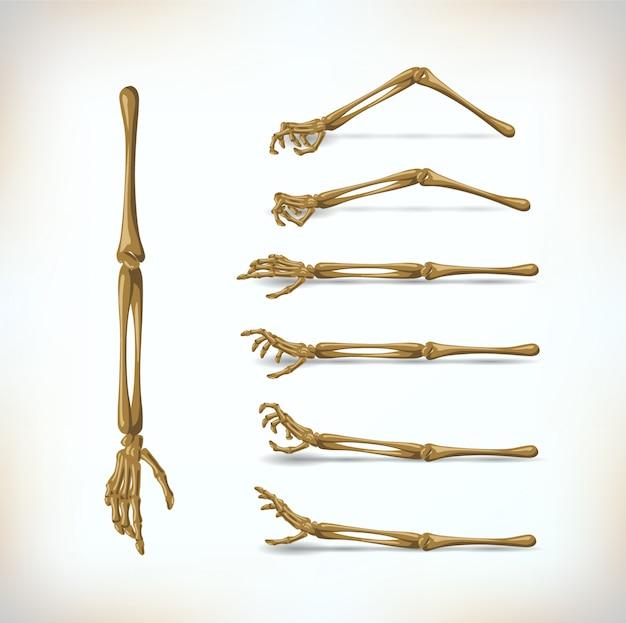 Knochen hand gesetzt