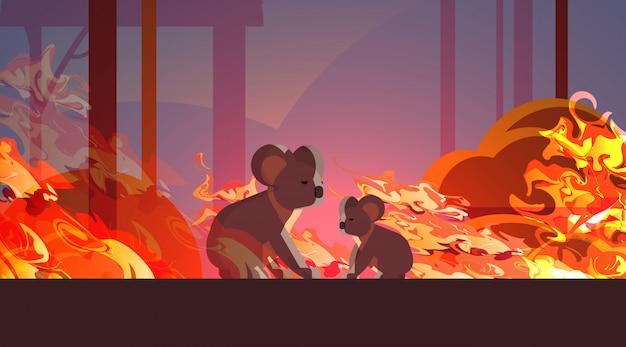 Koala, die von den bränden in australien-tieren sterben in den intensiven orange horizontalen flammen des verheerenden naturkatastrophenkonzeptes des buschfeuers entgehen