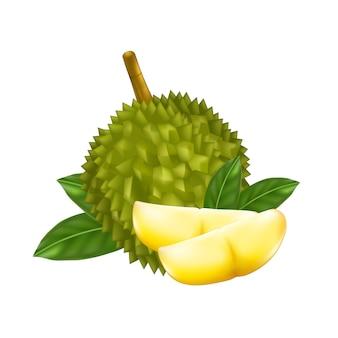 König der früchte, durianillustration
