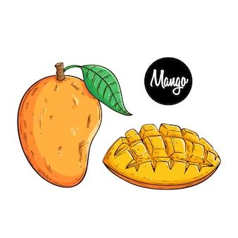Köstliche frische mangofrucht mit farbiger skizze oder hand gezeichneter art