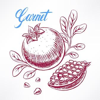 Köstlicher reifer skizzengranatapfel. handgezeichnete illustration