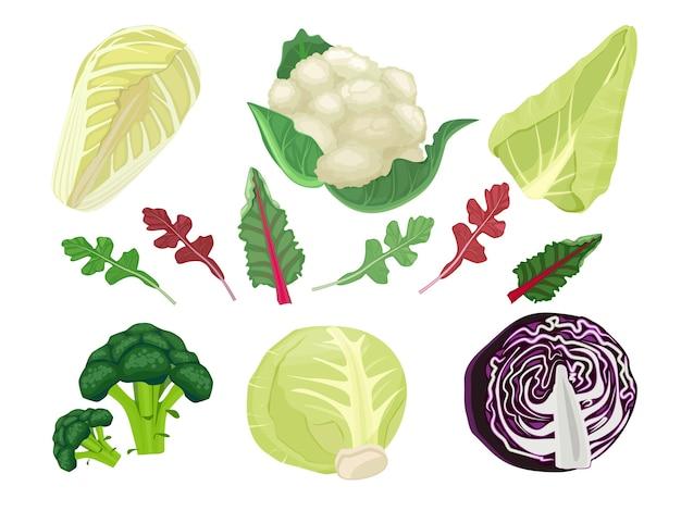 Kohlkarikatur. grüne vegetarische natürliche nahrungspflanzensalaternte essen satz. gemüse natürliche organische, gesunde ernährung kohl illustration