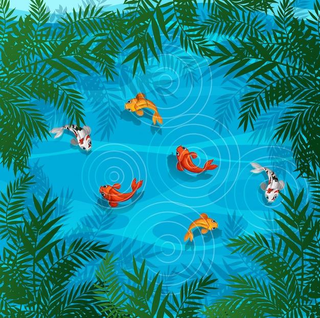Koi fische in einem teich