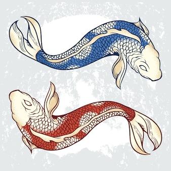 Koi karpfen illustrationen