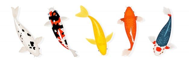 Koi karpfenfische illustration. japanischer koi-fisch auf weißem hintergrund