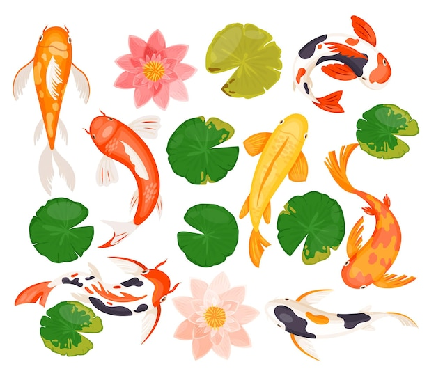 Koi karpfenfische illustrationssatz. Premium Vektoren