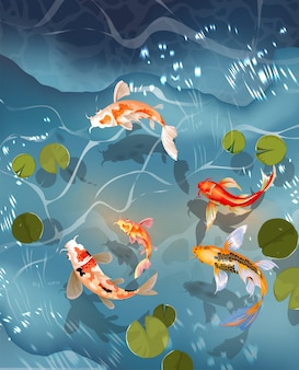 Koifisch, japanischer karpfen und bunte orientalische koi, die im wasser schwimmen.