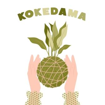 Kokedama japanische mooskugelpflanze in weiblichen händen gartenarbeit zu hause vektorillustration