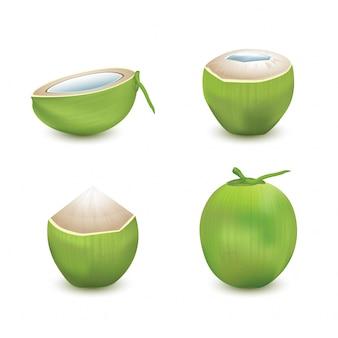 Kokosnuss auf weißem hintergrund eingestellt. 3d-vektorillustration