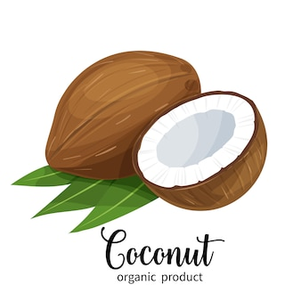 Kokosnuss im cartoon-stil