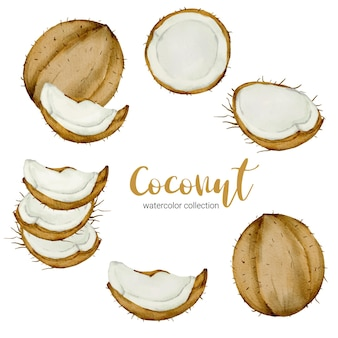 Kokosnuss mit aquarellsammlung