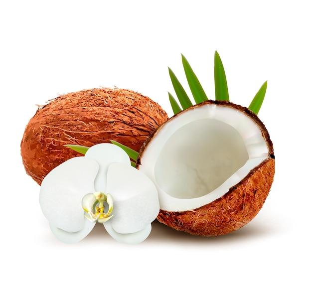 Kokosnuss mit blättern und weißer blume.