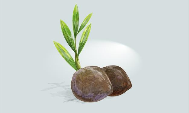 Kokosnuss-samen