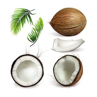 Kokosnuss tropische baumnuss und zweig set