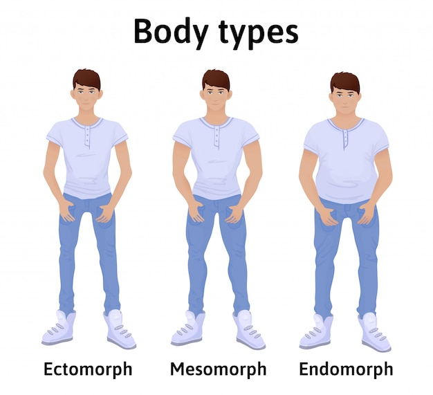 Konstitution des menschlichen körpers. körpertypen des menschen. endomorph, ektomorph und mesomorph. junge männer in t-shirts und jeans. illustration, lokalisiert auf weißem hintergrund.