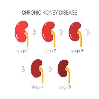 Konzept der chronischen nierenerkrankung