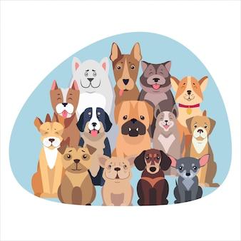 Konzept von den reinrassigen hunden, die flach sitzen und schauen