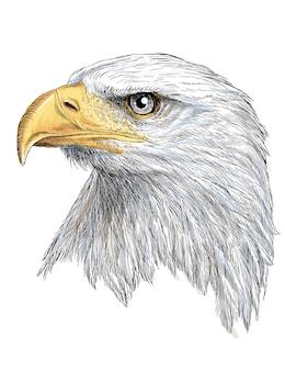 Kopf des weißkopfseeadlerhandabgehobenen betrages und -farbe auf weiß