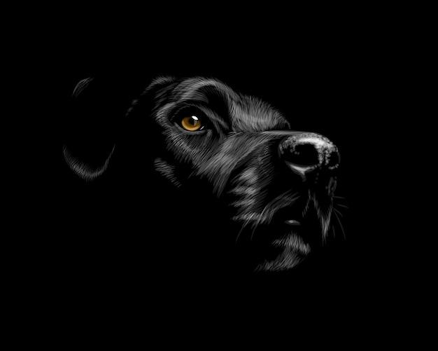 Kopf eines labrador retriever-hundeporträts auf einem schwarzen hintergrund. vektorillustration