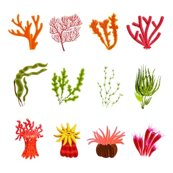 Korallen icons set