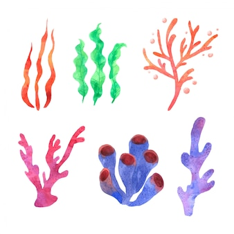 Korallenfarbenes aquarell