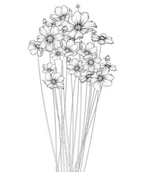Kosmosblumen und blattzeichnungen
