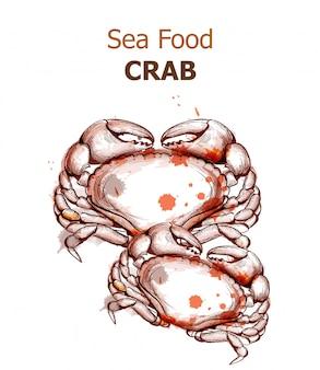 Krabbe lokalisiert auf weißem aquarell