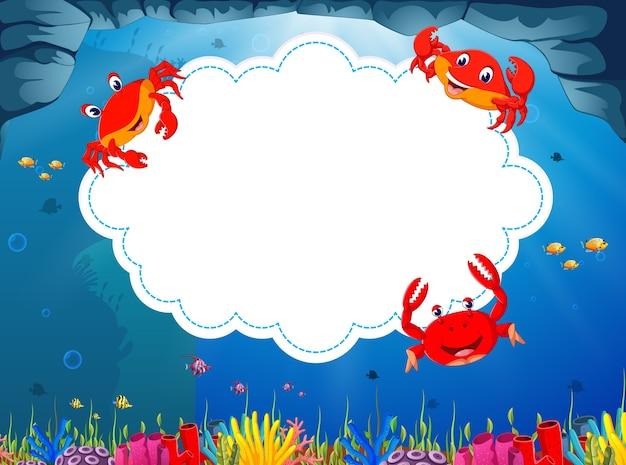 Krabbe mit papierhintergrund