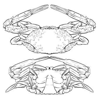 Krabbenzeichnung auf weißem hintergrund