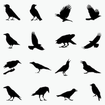 Krähe silhouetten