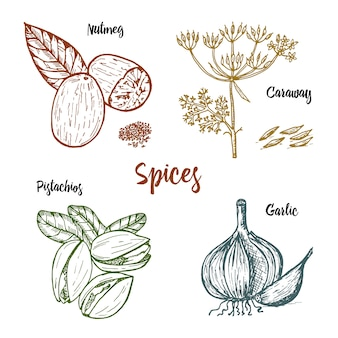 Kräuter, gewürze und gewürze. muskatnuss und pistazien und knoblauch, kümmel und samen für das menü.