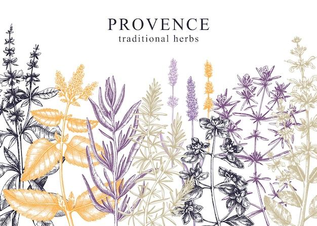 Kräuterhintergrund im farbigen handskizzierten aroma- und heilpflanzendesign