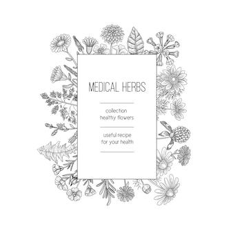 Kräuterrahmen. kräuterhintergrundentwurf für handgezeichnete schablone des medizinischen konzeptnaturkräuter der spa-pflanzenpflanzen. illustration kräuter medizinische, natürliche organische kräuter