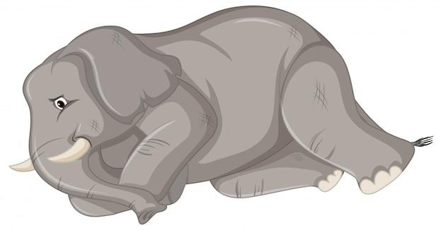 Kranker elefant
