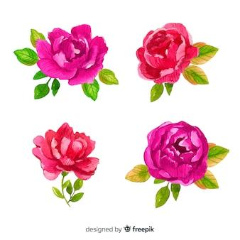 Kreativer satz pfingstrosenblumen