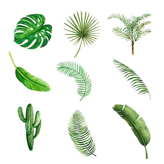 Kreatives element des tropischen betriebsaquarells, vektorillustrationsdesign.