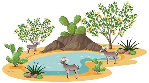 Kreosot-buschpflanze in der wilden wüste