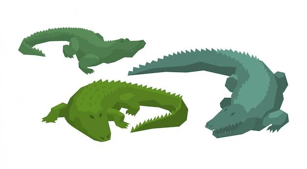 Krokodilvektor-karikaturkrokodilcharakter des grünen alligatorfleischfressers