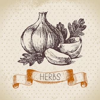 Küchenkräuter und gewürze. weinlesehintergrund mit hand gezeichnetem skizzenknoblauch