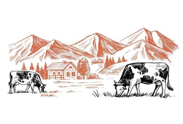 Kühe, die gras auf dem hintergrund der farm kauen