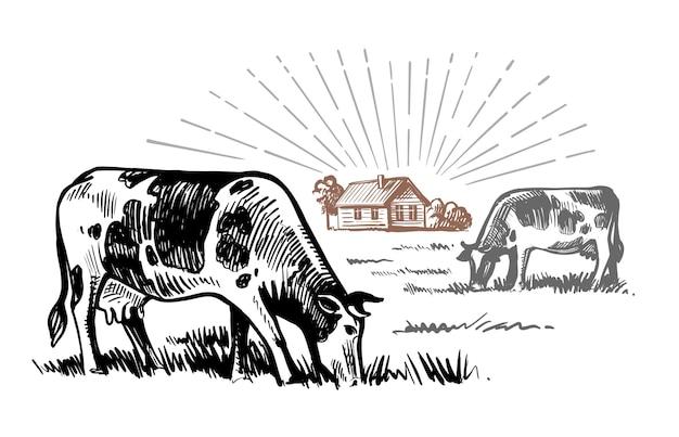 Kühe grasen auf dem feld im dorf.