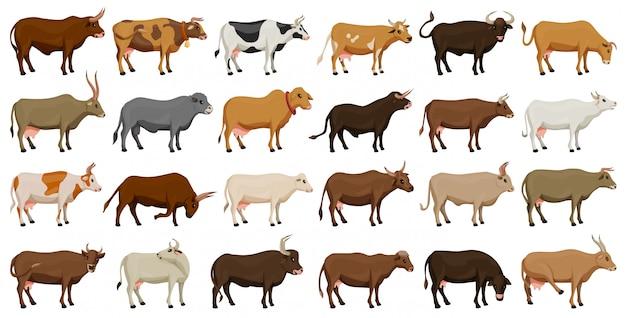 Kuh der gesetzten ikone der tiervektorkarikatur lokalisiertes karikaturikonen-vieh der kuh