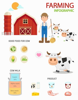 Kuhfarm infografiken, illustration