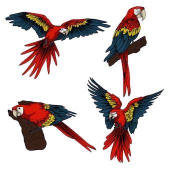 Kunstwerk illustration und t-shirt design fische schädel tierkreis in rahmen ornament ornament premium vektor