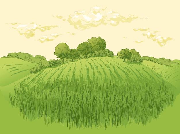 Ländliche landschaftsfeldweizenillustration