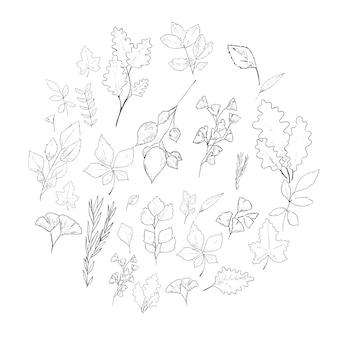 Lässt handgezeichnete elemente. natur minimale illustrationselemente.