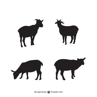 Lamb silhouetten