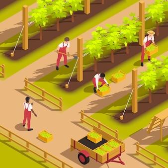 Landarbeiter in einheitlichen latzhosen, die traubenfüllkisten ernten und sie in eine isometrische zusammensetzung des wagens legen