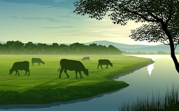 Landschaft mit fluss und grasenden kühen im grünen feld