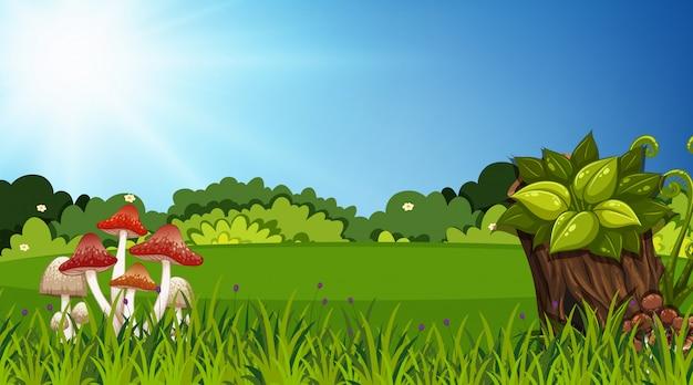 Landschaftshintergrund des grünen grases und des pilzes